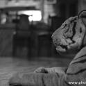 2012India564