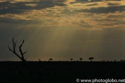 2013.11_ZA_Kruger-47