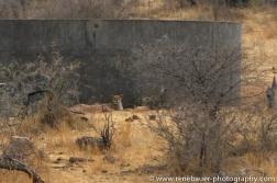 2014_africa_krugerpark-17