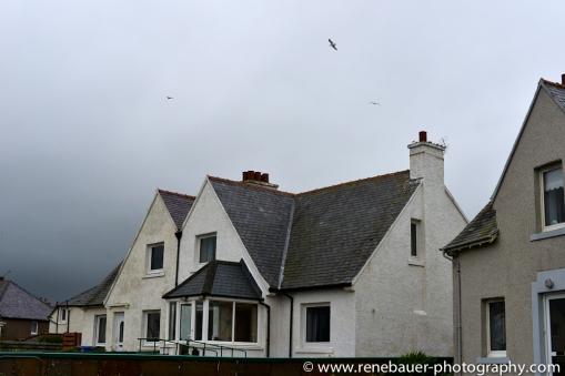 2014_scotland_northcoast-22