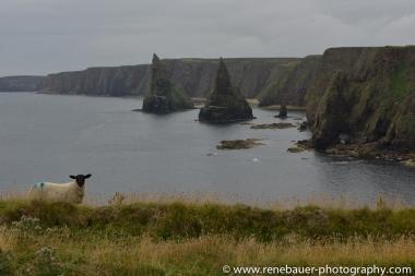2014_scotland_northeast-20