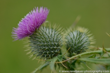 2014_scotland_northeast-21