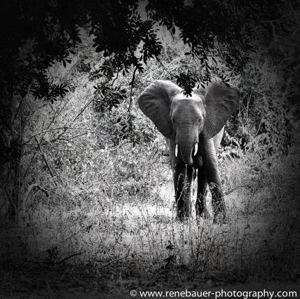 2015_zambia_sth luangwa-13