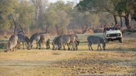 2015_zambia_sth luangwa-24