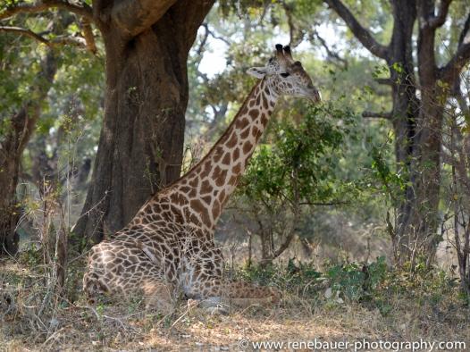 2015_zambia_sth luangwa-29