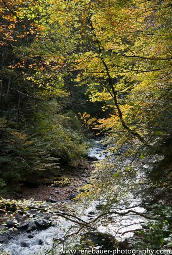 blog15.10_autumn-11