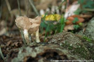 blog15.10_autumn-13