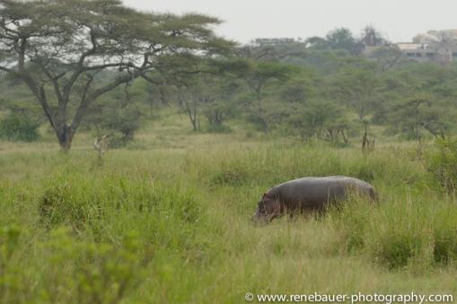 2016.2_TZ_safari-33