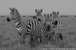 2016.2_TZ_safari-39