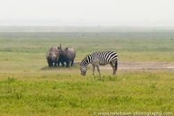 2016.2_TZ_safari-44