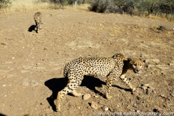 2016.4_leopard-12