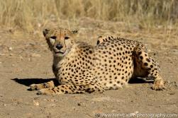 2016.4_leopard-14