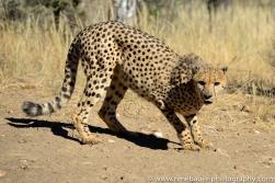 2016.4_leopard-15