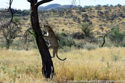 2016.4_leopard-20