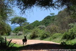 2016-12_ke_tsavo_west-25