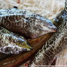 2016-12_tz_dar_fishmarket-16