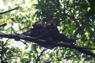 2017-02_ug_chimpanzee-20