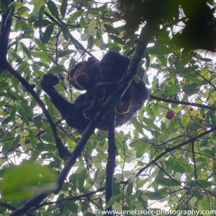 2017-02_ug_chimpanzee-21