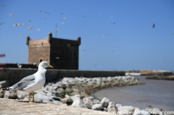 2018_bestof_morocco-62